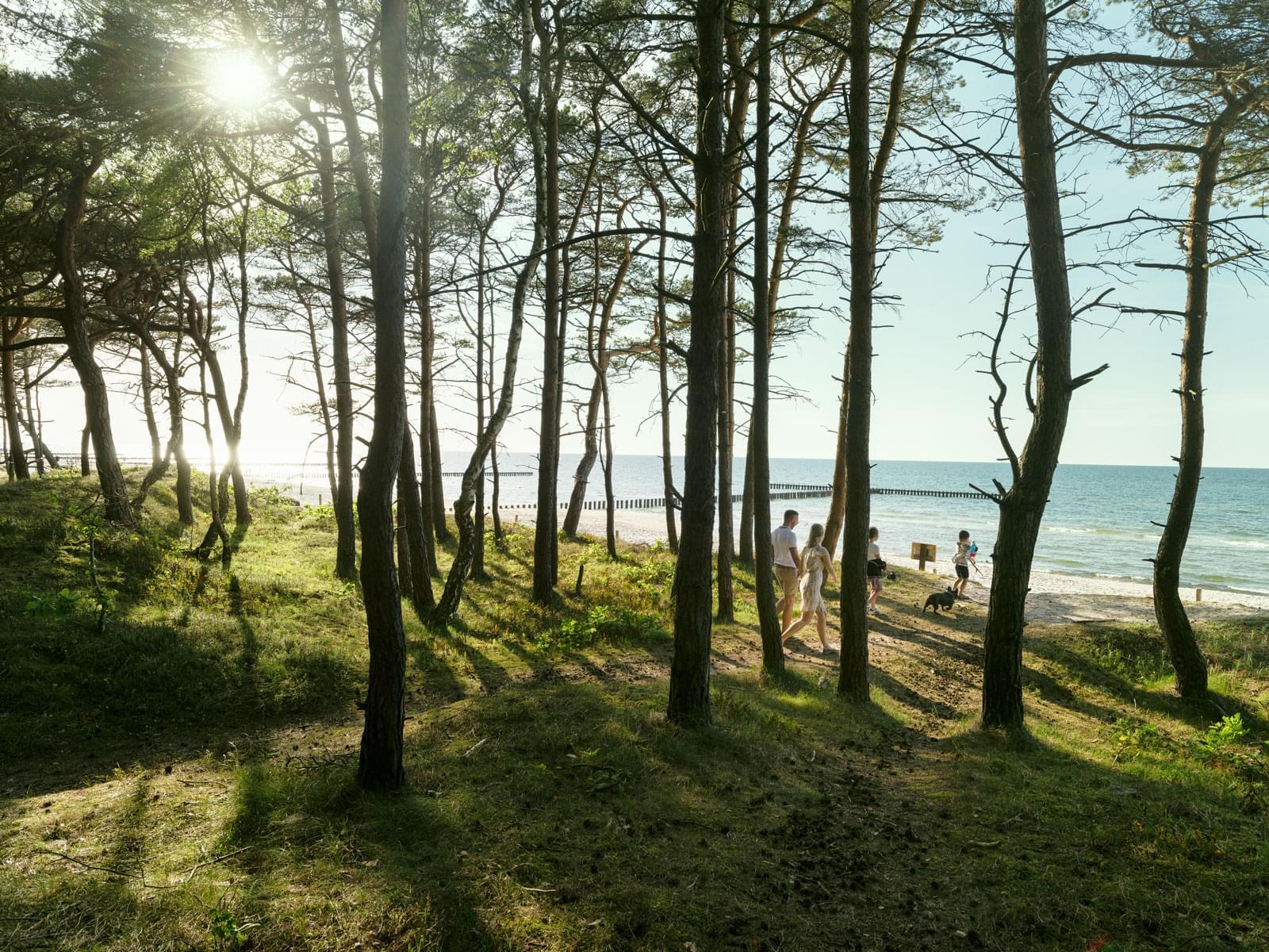 Zejście na plażę między drzewami